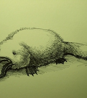 animal, drawing and illustration
