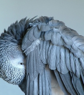 animals, feathers and gray