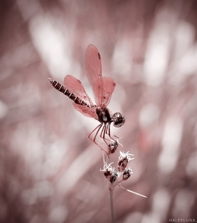 bug, dragonfly and insect