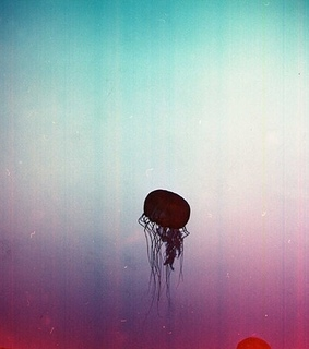 color, jellyfish and natural history