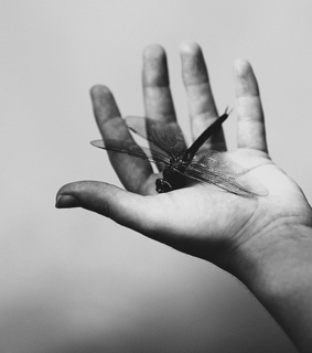 black and white, dragonfly and hand