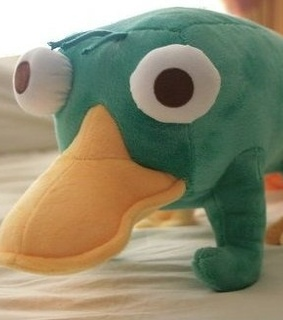 cute, eyes and perry