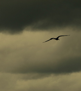 beautiful, gull and sky