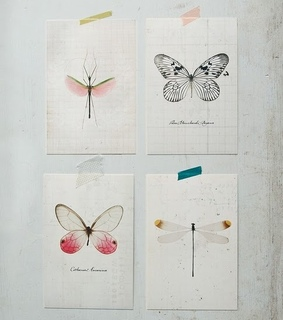 bug, butterfly and design