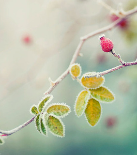 ?? ?, beautiful and dew drops