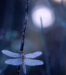 blue, candle and dew