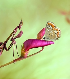 animal, bugs and butterfly