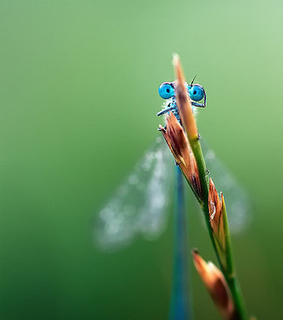 bug, dragonfly and green