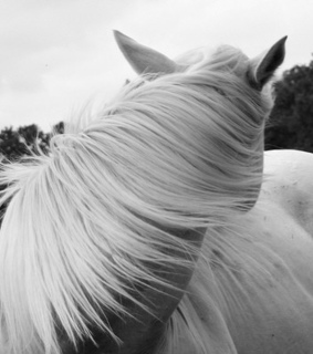 black and white, hair and horse