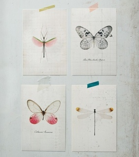 art, butterfly and dragonfly