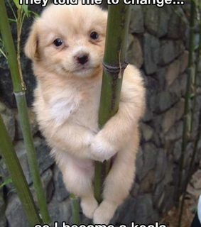 animals, cute pet and funny animals