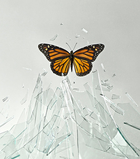 amazing, brock davis and butterfly