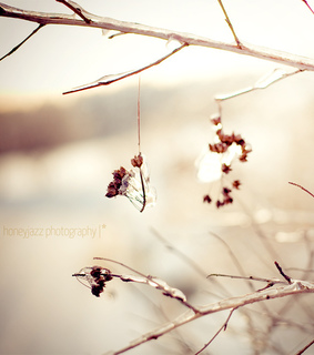 berries, bokeh and canon eos 5d