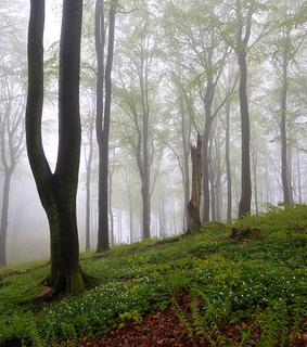 beech, canon eos 7d and forest