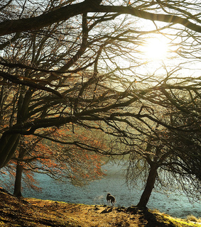 beech, breath and cold