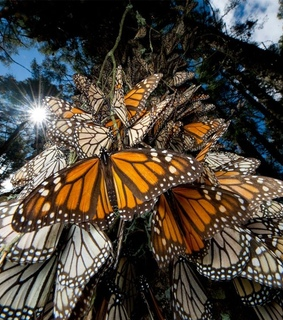 butterfly, forest and mexico