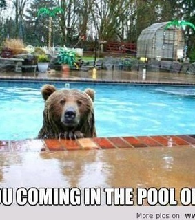 funniest pics, funny and funny animals
