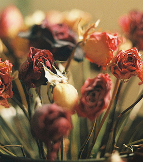 dried, dried flowers and dried roses