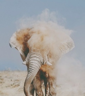afrika, blue sky and elefant