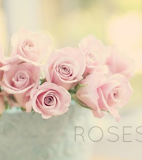 pink, soft and roses flowers