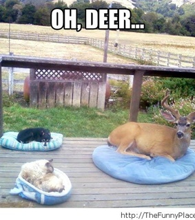 funny animals, funny conversations and funny memes