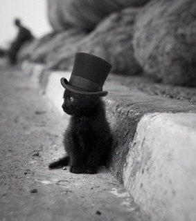 black, black and white and black cat