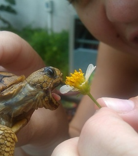 cutest thing ever, eat and flowers