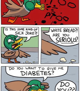 angry, bird and bread