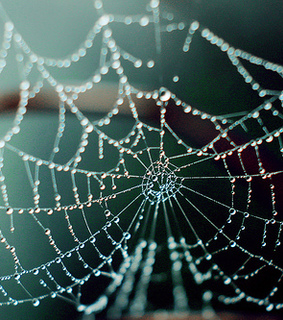 cool, nature and spider web