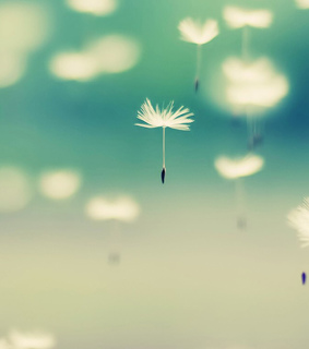 background, cover and dandelion