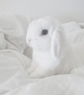 bunny, cute and cutest thing ever