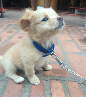 animals, blue and cute