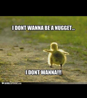 adorable, chicken and funny