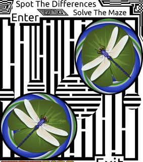dragonfly and maze