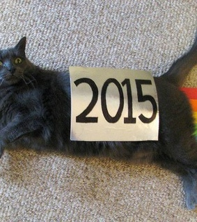 2015, backgrounds and cats