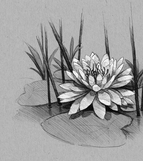 art, drawing and flower