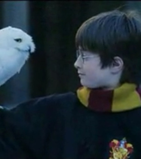 dumbledore, harry and harry potter