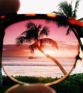 beautiful, glasses and palm trees