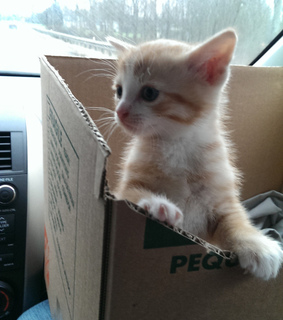 cat, cute and funny