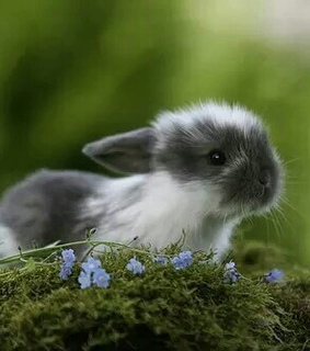 bunny, cute and flowers