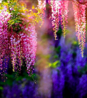 flowers, nature and wisteria