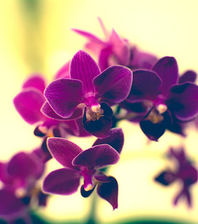 fine art photography, flower and orchid