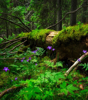 ferns, flowers and forest