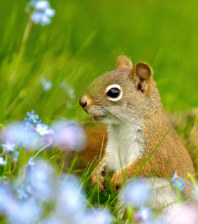 animals, cute and flowers