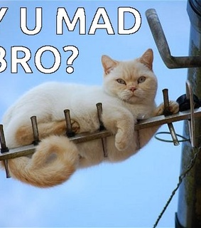 antenna, funny cat and y u mad bro