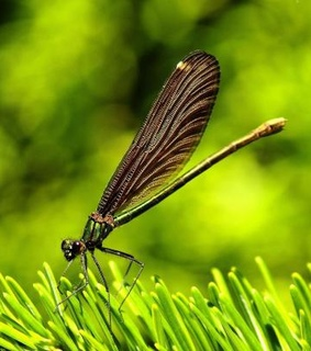 bacground, dragonfly and grass