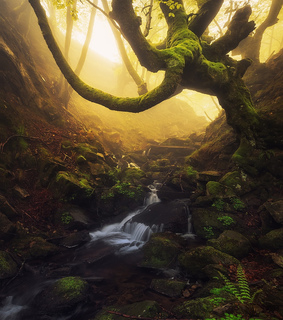 beech, forest and moss