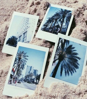 miami, new york city and palm trees