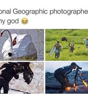 animals, funny and national geographic