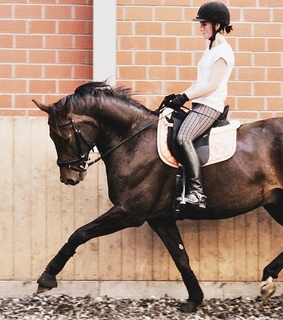 allure, dressage and equestrian